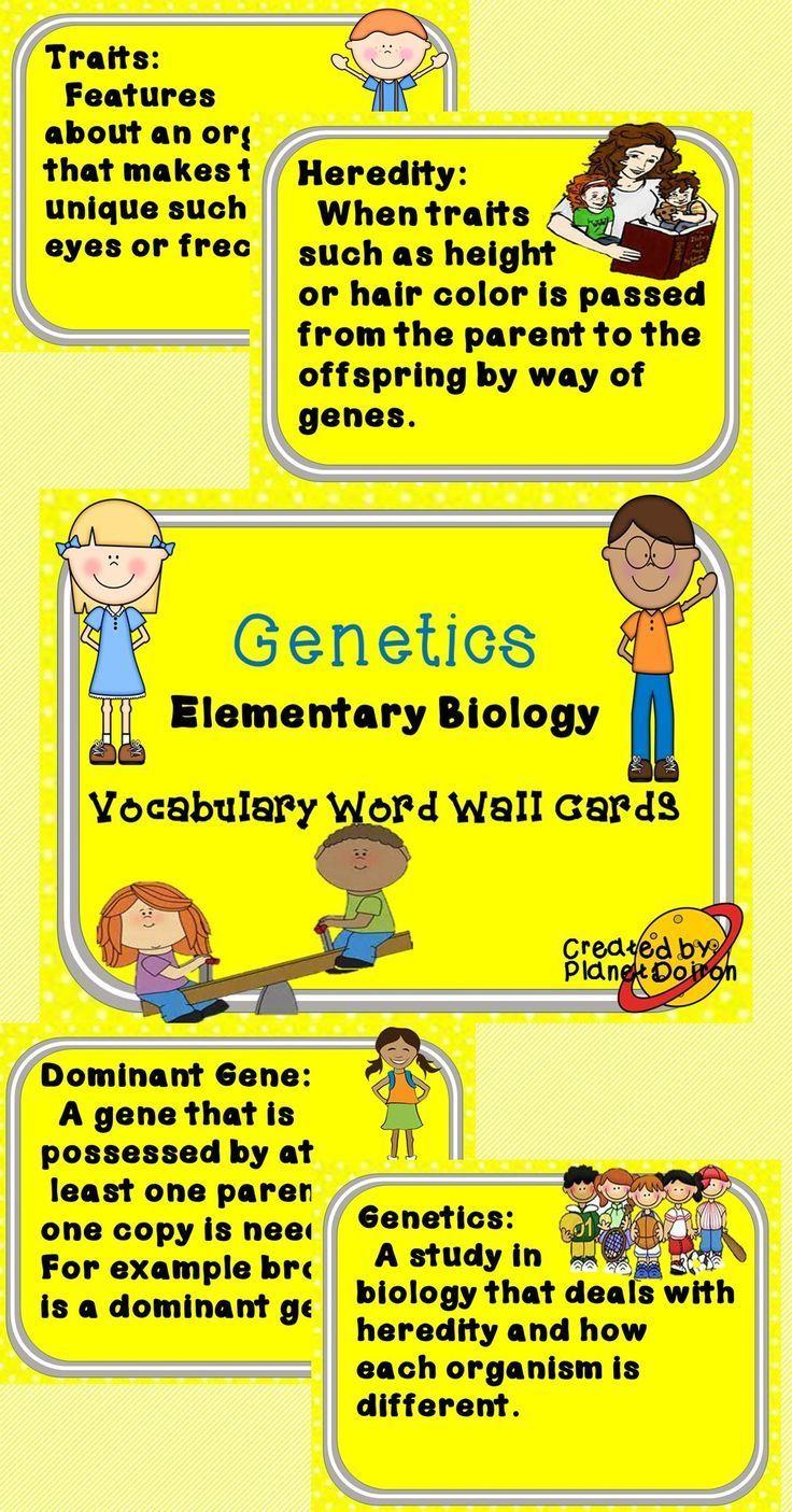 Elementary biology genetics vocabulary word wall cards | Vocabulary ...