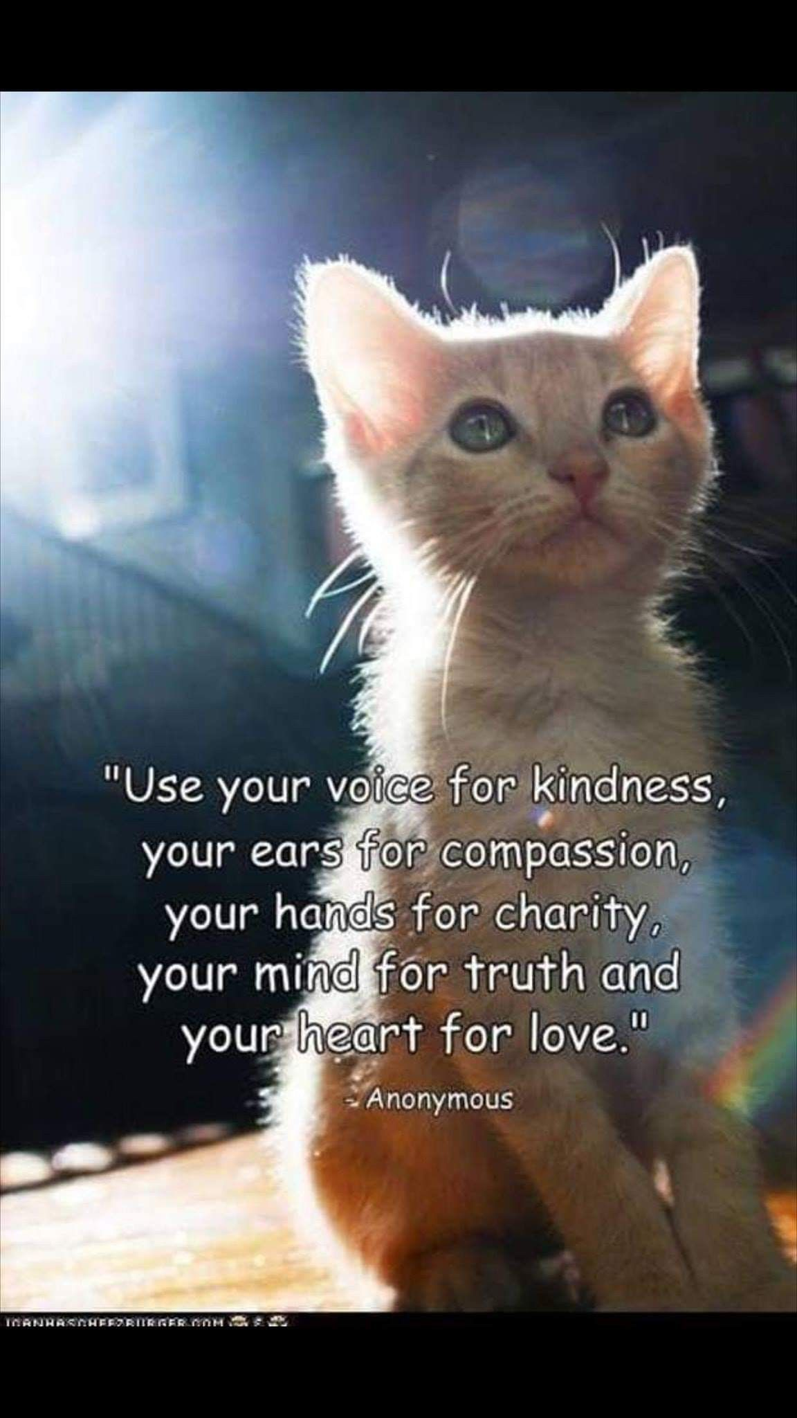 Pin By Diana Gisonda On Critters Cat Poems Animal Quotes I Love Cats