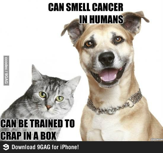 Cats and dogs Cat vs dog, Ticks on dogs, Animals