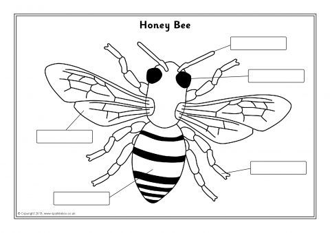 Bumble Bee Diagram Ibanez Wiring Rg Image Result For Label The Parts Of A 2nd Grade Science