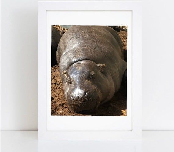 PRINT | Baby Hippo | Print Poster #babyhippo