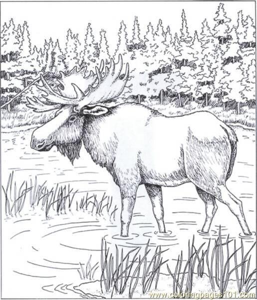 1Alaskan_Moose_op_515x600_pdwsh.jpg 515×600 pixels   coloring ...