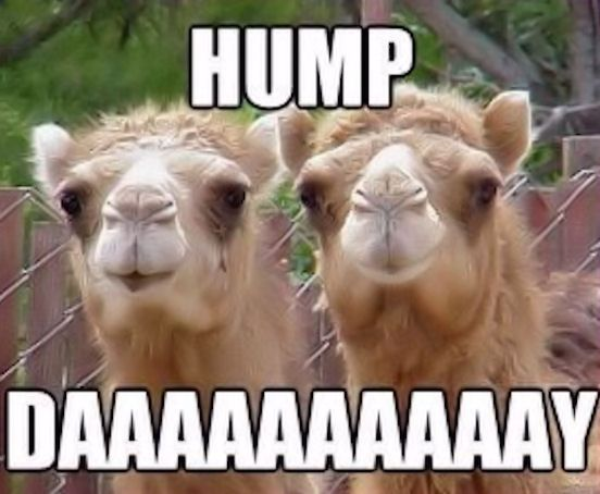 aae39821c66224c33c6c3bad014cf34f hump day quote quotes humpday wednesday days of the week camels