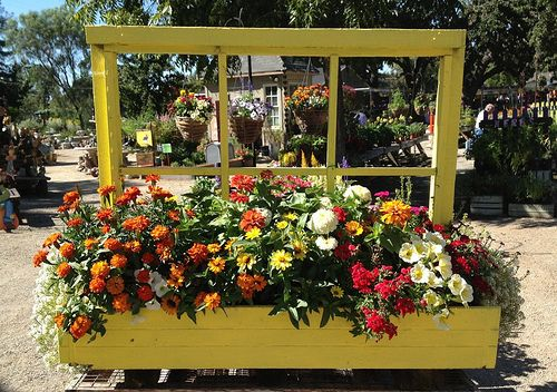 Decor Store Livermore: Window Box Planter @ Alden Lane Nursery, Livermore CA