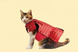 Armor suit for cats