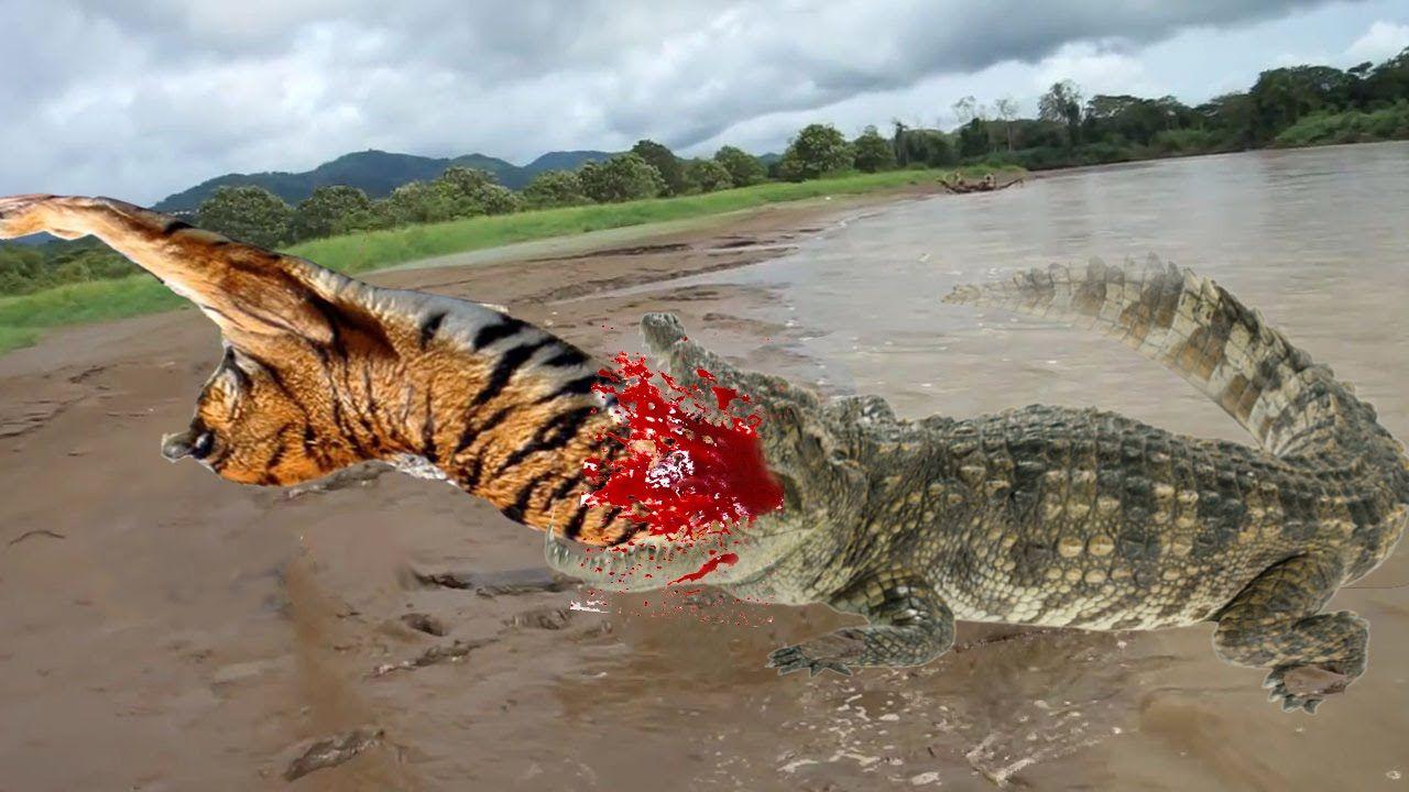 Tiger vs Crocodile Fight To Death | Tiger vs Crocodile ...
