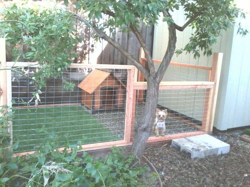 Pinot's dog run   Backyard dog area, Dog area, Dog backyard