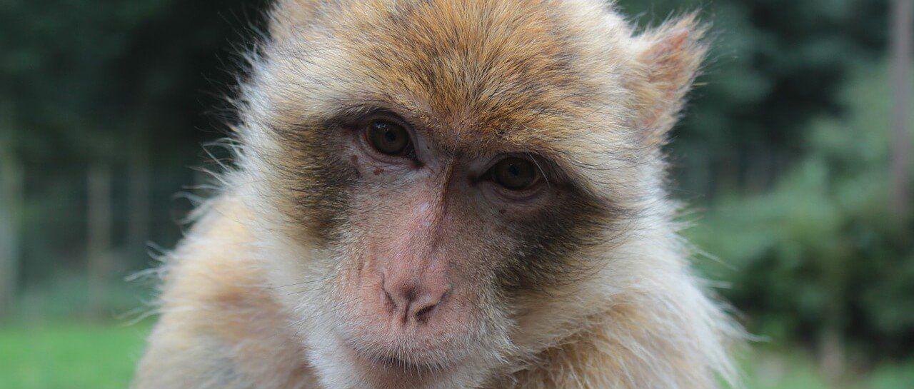 Help save wildanimals World animal protection, Animals
