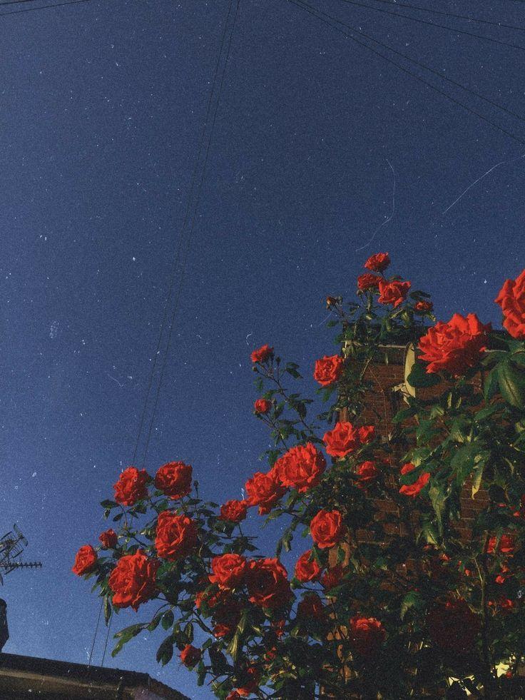 Wild Flower Child Pinterest: LoveMeSoNaturally | Gambar ...
