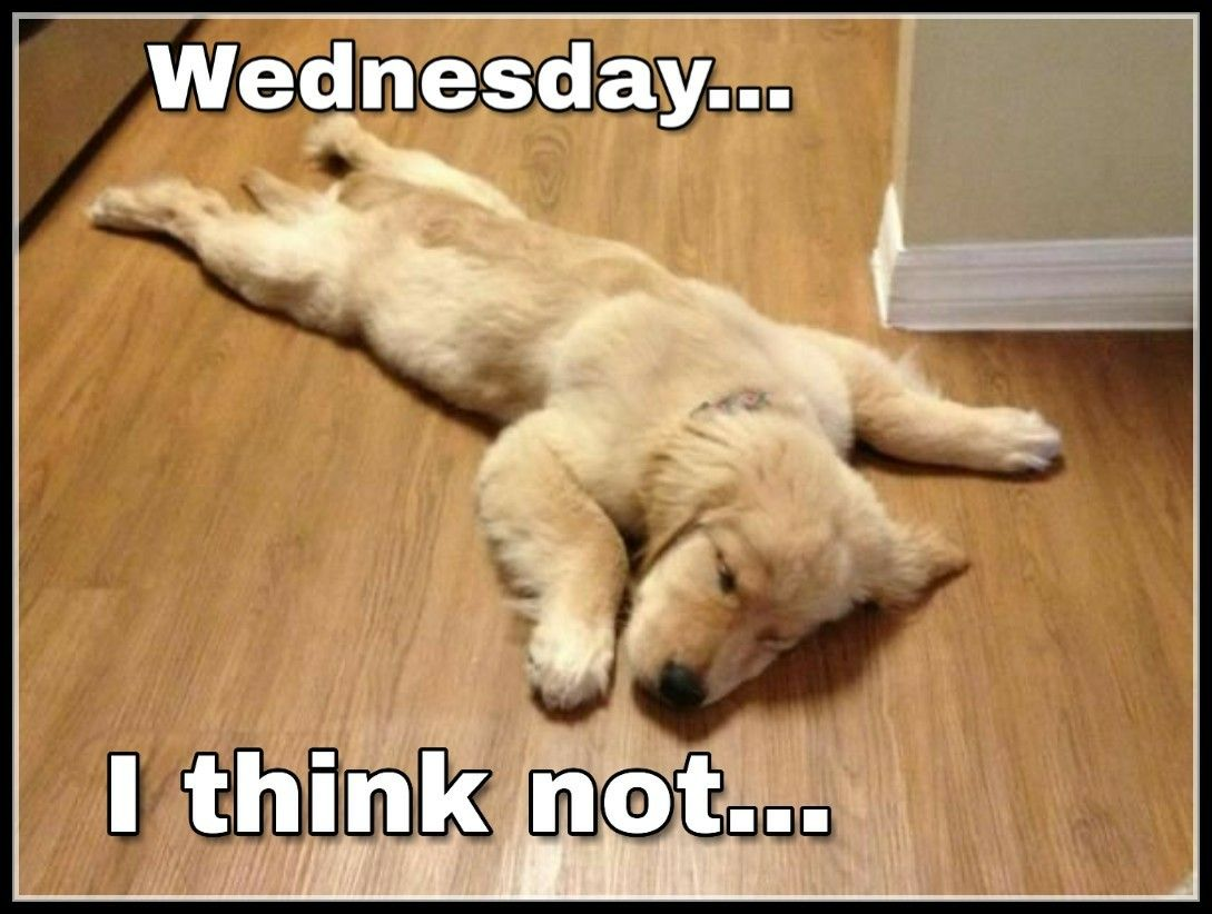 Pin by Traciburles on day of the week humour Funny dog