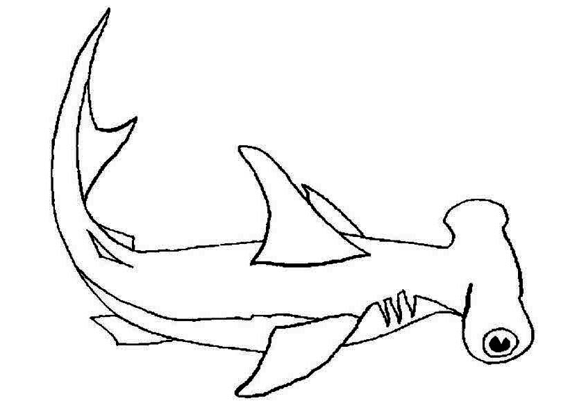 A Hammerhead Shark On Its Habitat Coloring Page Kids Play Color Shark Coloring Pages Coloring Pages Online Coloring