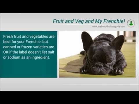 What S The Best Food To Feed My French Bulldog Cat Nutrition