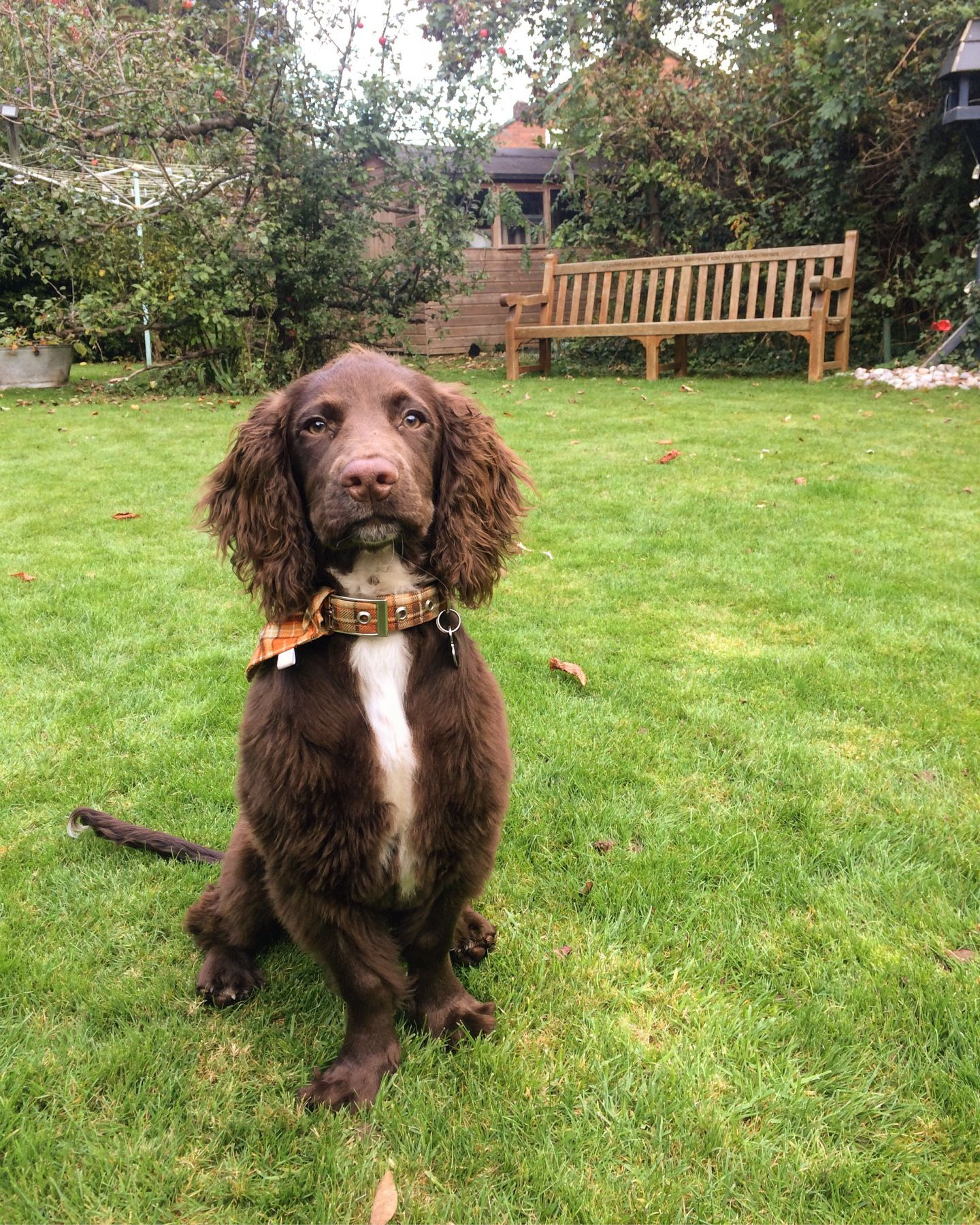 Ways to Help a Teething Puppy Dog training, Puppy