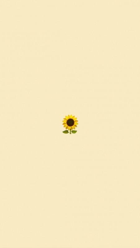 Vsco Cute Wallpapers Lockscreens Cute Simple Wallpapers Iphone Wallpaper Yellow Sunflower Wallpaper