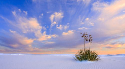 Rising from the heart of the Tularosa Basin is one of the worlds great natural wonders; the glistening white gypsum dunefields of White Sands National Monument in New Mexico. Seemingly stark and barren, the 275 square miles of brilliant white gypsum sand are home to an amazing diversity of life, weaving a spell over all who visit it. Sunset photo by Donna Schneider