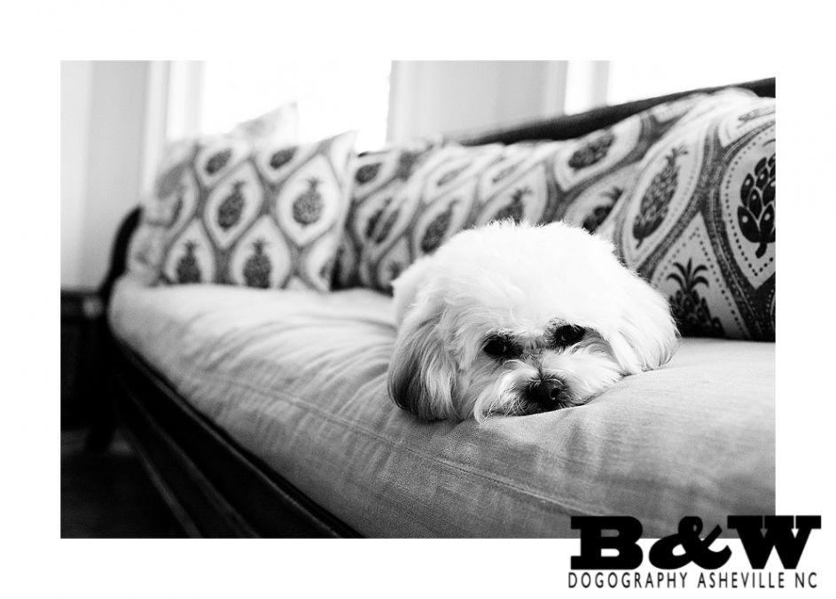 Asheville nc lifestyle dog photography animal