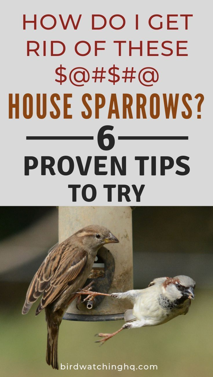 6 Proven Tips To STOP House Sparrows From Taking Over Your ...
