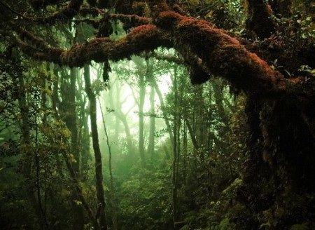 Floresta úmida e densa