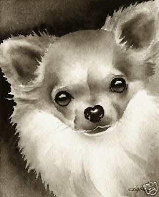 LONG HAIRED CHIHUAHUA Dog Watercolor ART PRINT Signed by Artist DJR