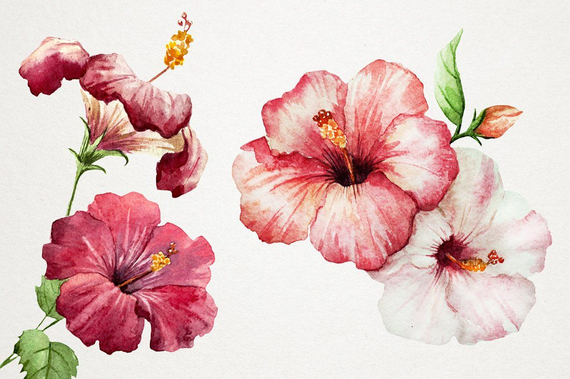 Tropical Watercolor Set Png Hibiscus Drawing Flower Painting Watercolor Flowers