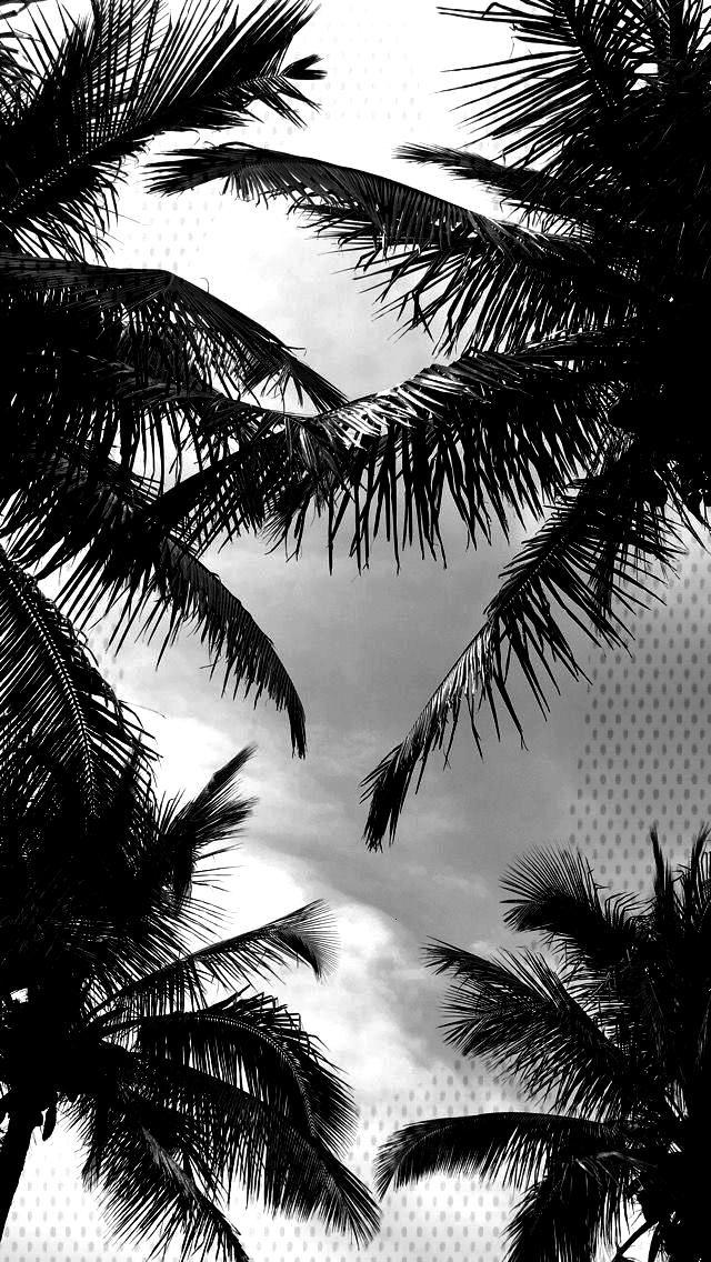 Hintergrundbild Palme Schwarzweiss - sali barry I the habit -samsung Hintergrundbild Palme Schwarz