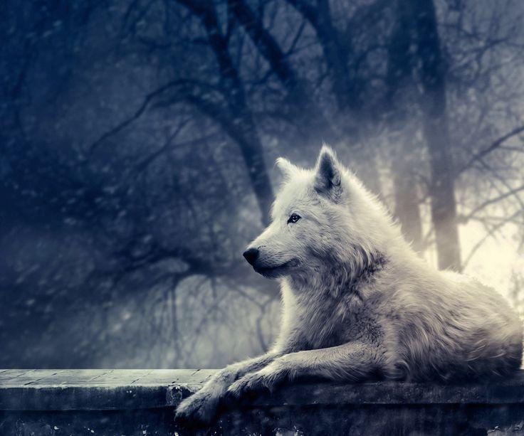 Epingle Par Scormawy Sur Nature Loup Blanc Animaux Beaux Fond D Ecran Loup