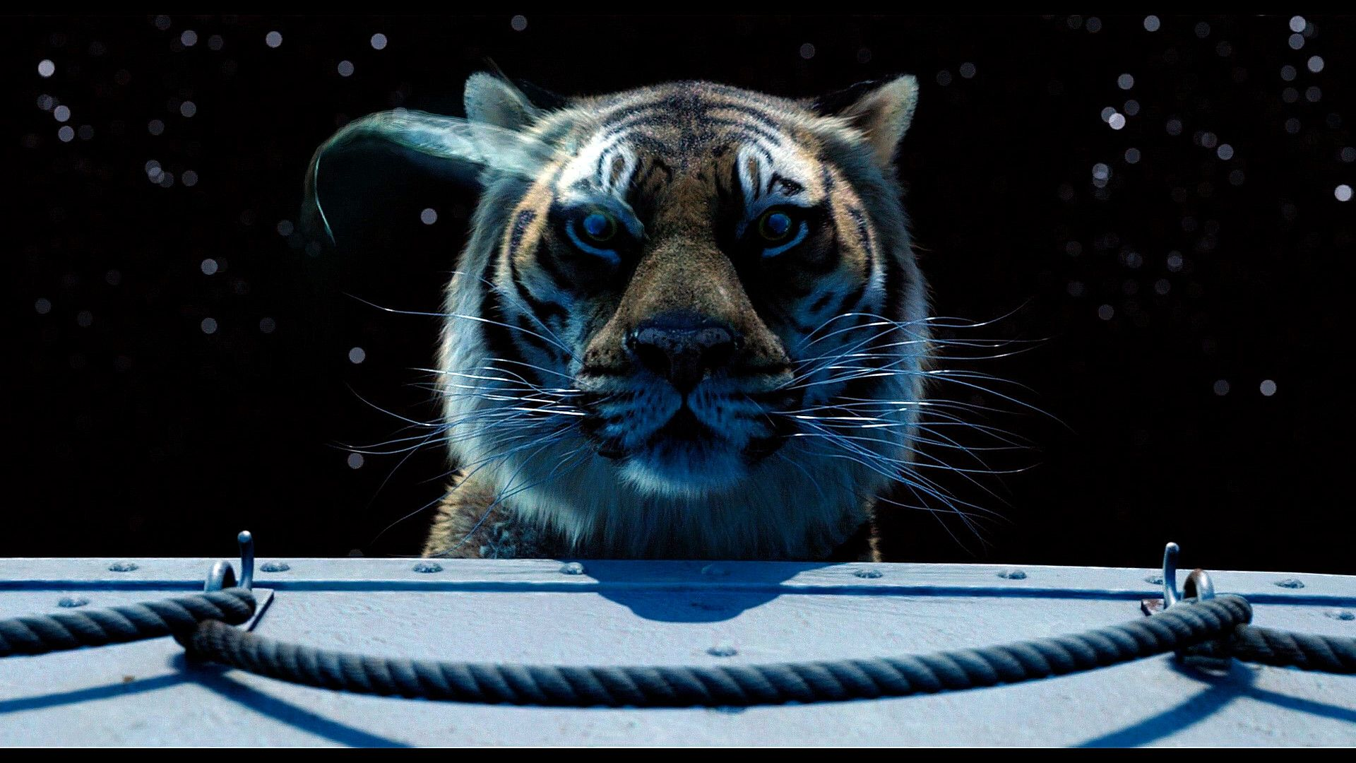 richard parker life of pi inspire me oscar richard parker life of pi