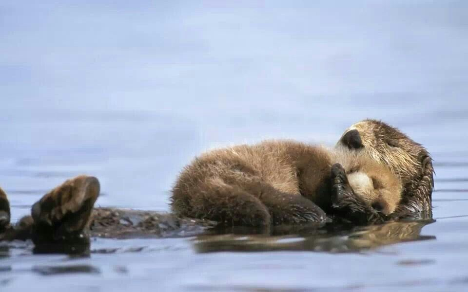 Mom And Baby Otter Awww Pinterest Baby Otters Otters And Animal - 22 adorable parenting moments in the animal kingdom