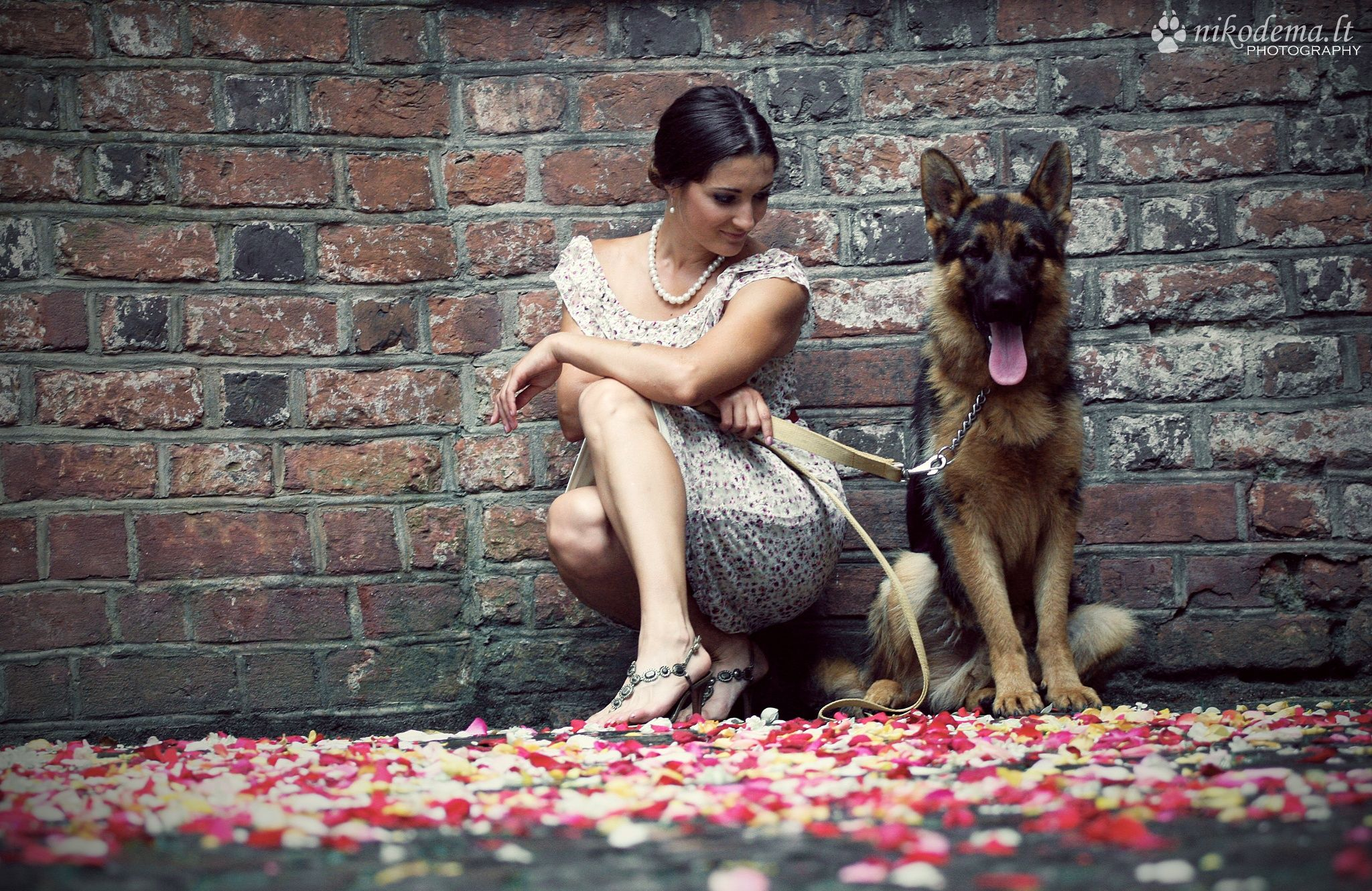 German Shepherd With Owner Fotosessiya Sobaki Puteshestviya