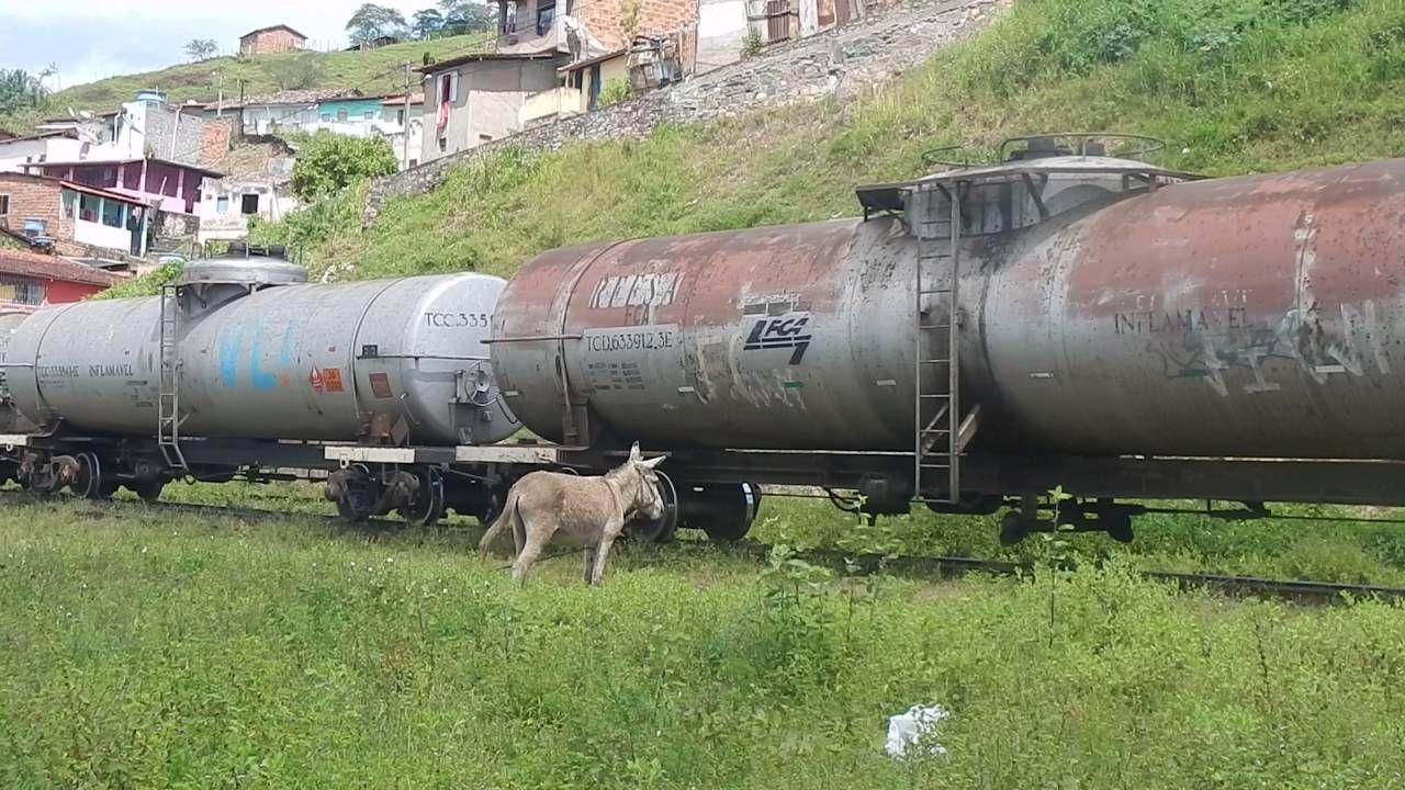 JUMENTO x COMBOIO (Óleo Diesel) - Cachoeira-Bahia-Brasil - HD