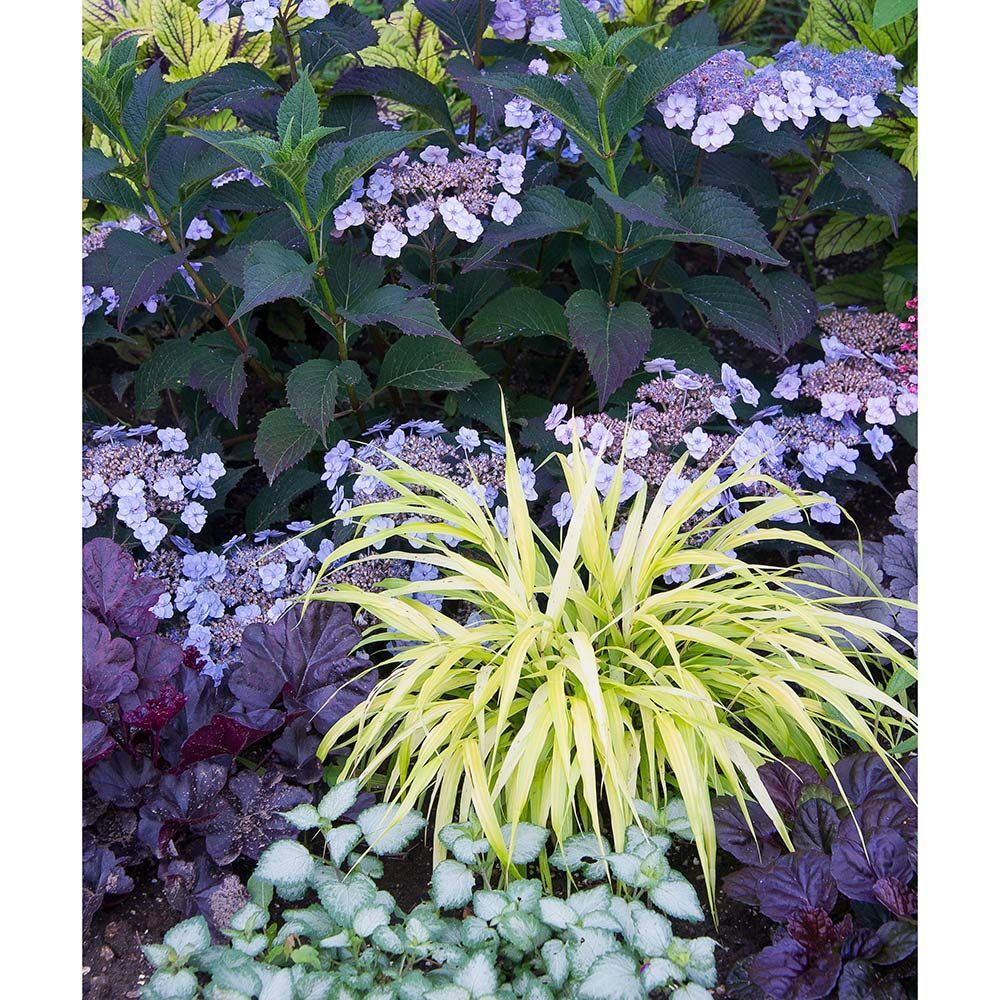 House Plants For Shady Rooms: Shade Garden, White Flower Farm