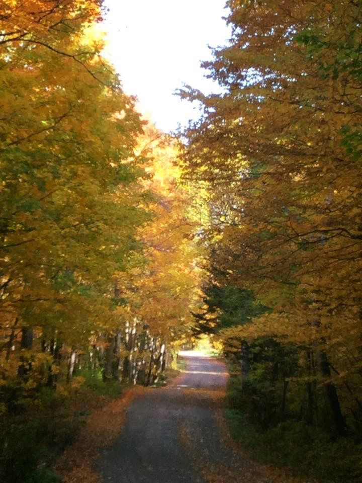 Pin by Susan Mitchell on Fall Scenery Pinterest