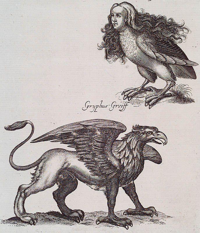 [Harpyea & Gryphus Greiff]  Historiæ Naturalis de Avibus. Francofurti ad Moenum : Matthæi Meriani, 1755.