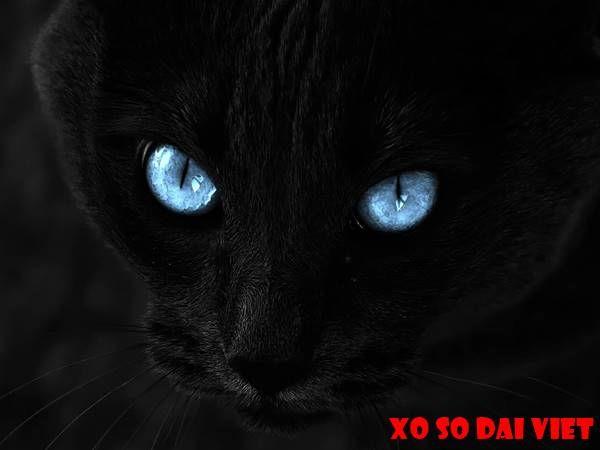 nằm mơ thấy mèo đen đánh con gì