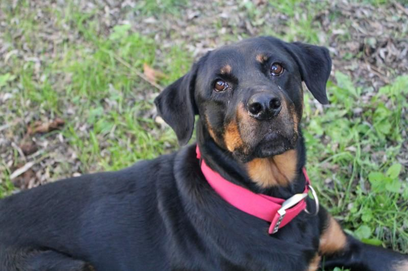 Adopt Kimber on (With images) Animals friends, Animals