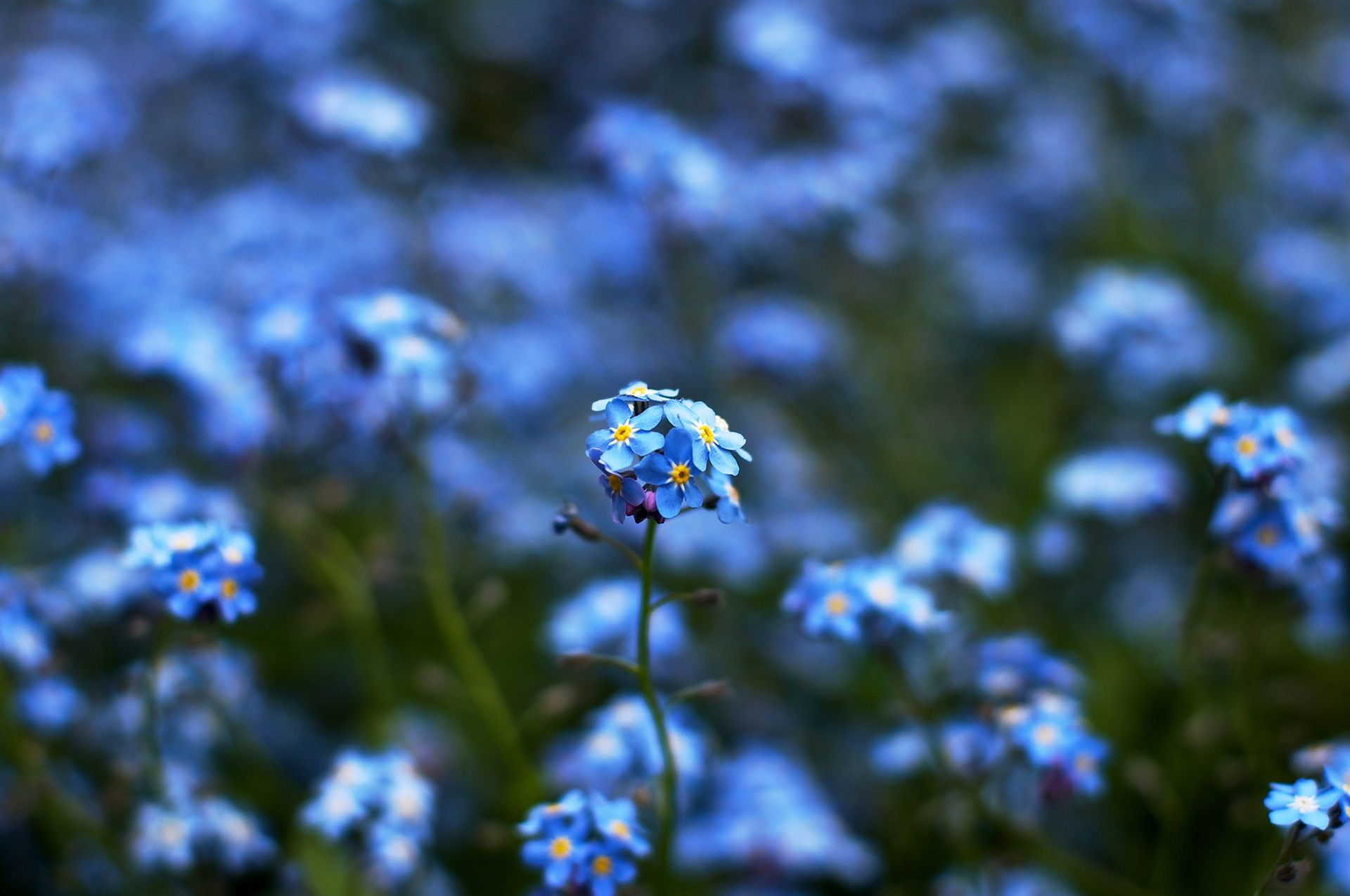 #bokeh, #yellow, #blur, #focus, #Blue, #color, #green, #nature, #flowers