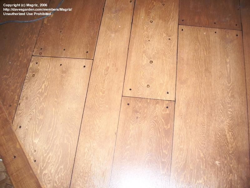 These Planks Are Drawn On A Plywood Floor With A Sharpie Diy Flooring Flooring Plywood Plank Flooring