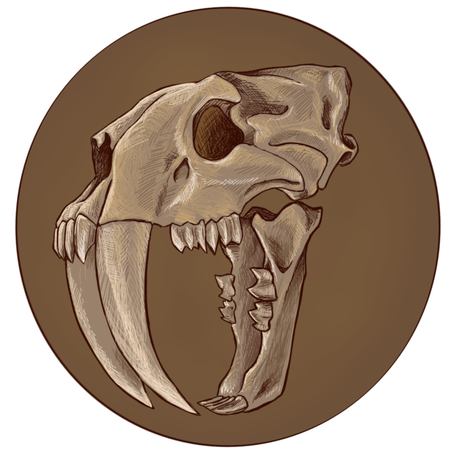 be06ef68e Smilodon Skull by virgiliArt | X in 2019 | Skull, Tiger skull, Cat skull