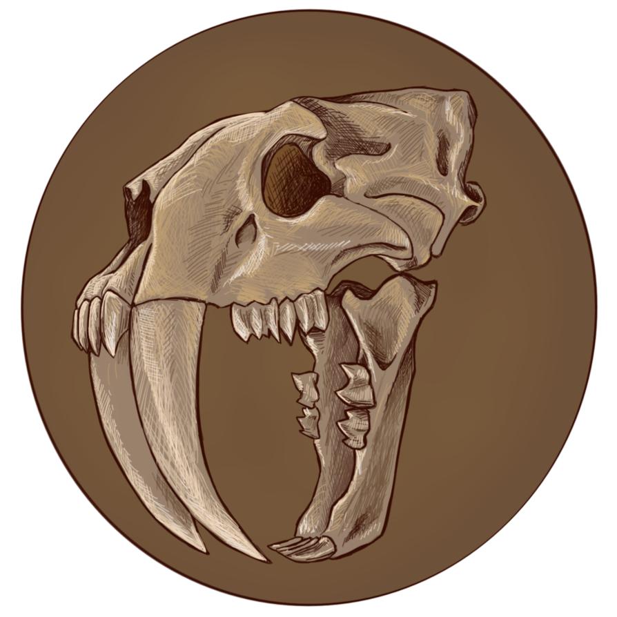 818069ecf Smilodon Skull by virgiliArt | X in 2019 | Skull, Tiger skull, Cat skull