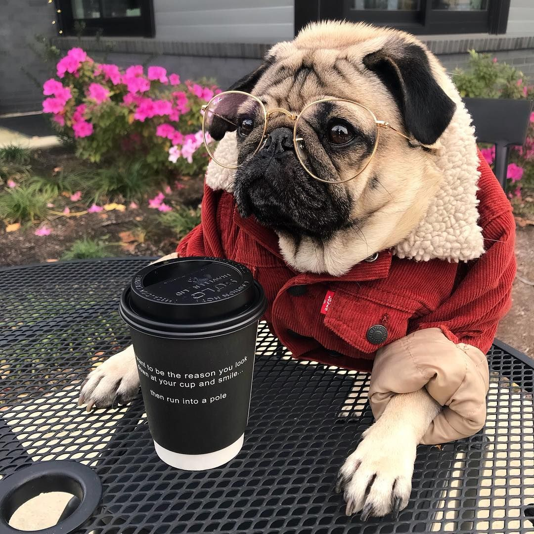 17 Times Doug The Pug Was The Hipster Man Of Your Dreams In 2017 Doug The Pug Cute Pug Puppies Pugs Funny