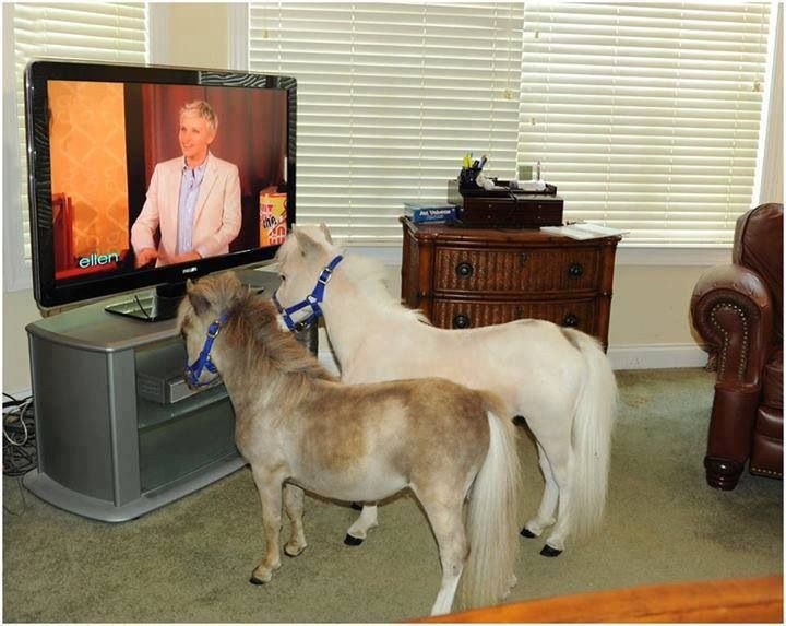 Pin By Christina Baker Jones On Therapy Carousel Horses Miniature Horse Horses Mini Horse