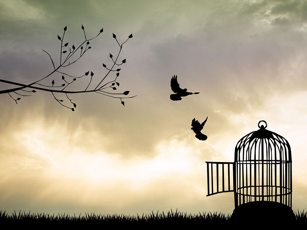 Birds flying out of cage - crazywidow.info | Birds flying, Bird ...