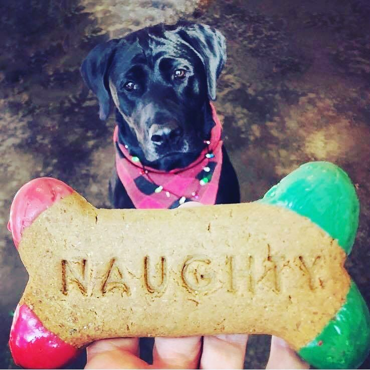Naughty Or Nice They All Deserve Treats Find The Perfect
