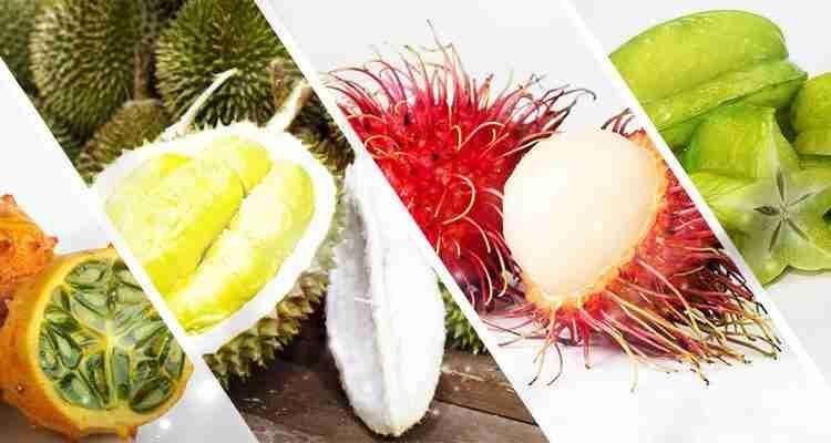 توجد في جميع انحاء دول العالم اكلات واطعمة وفواكه غريبة الشكل والنوع والحجم والطعم ونقدم لكم اليوم هذه المجموعة الصغيرة من اغرب انو Coconut Fruit Travel Music
