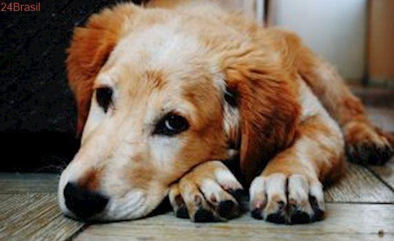 AMPARA Animal promove campanha de adoção em Ipanema, no Rio