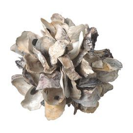 """Shell decor in natural with an oyster motif.   Product: DecorConstruction Material: ShellColor: NaturalFeatures:  Oyster motifWill enhance any décor  Dimensions: 6"""" H x 6"""" Diameter"""