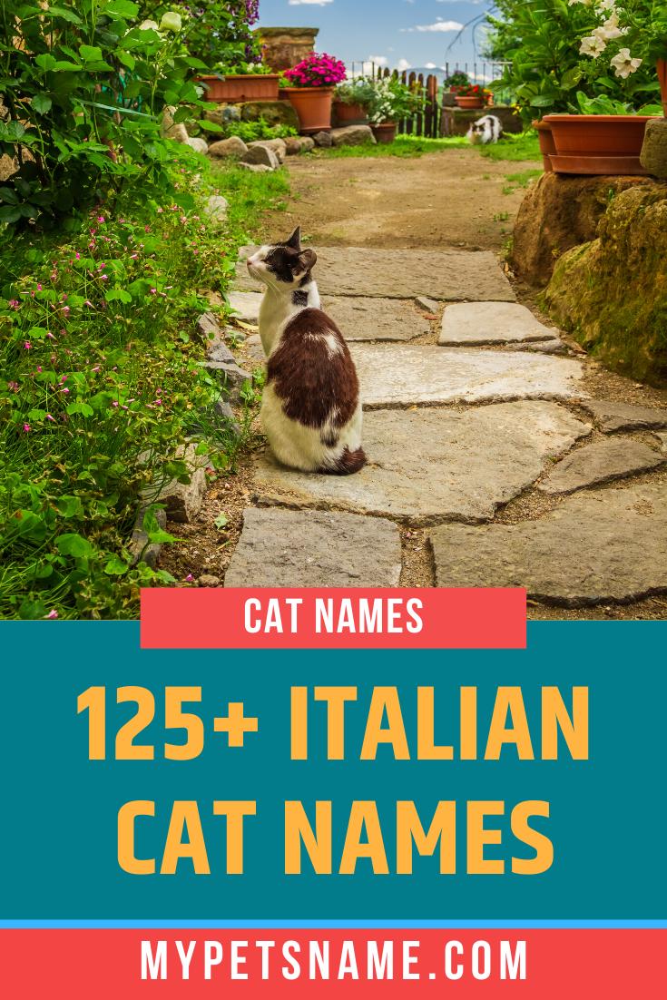 Italian Cat Names In 2020 Cat Names Cats Italian