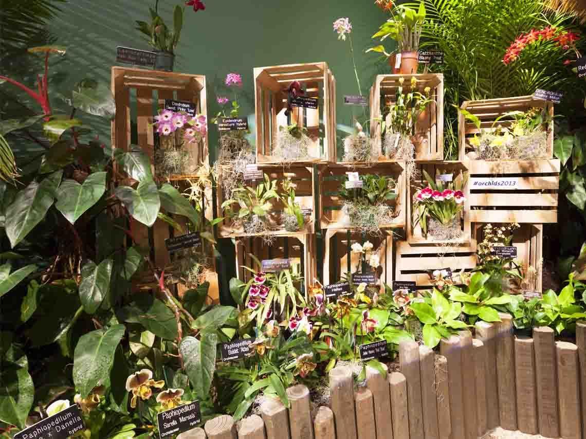 La Asociación Mexicana de Orquideología presenta la exposición de orquídeas en San Ángel. Habrá plantas, talleres, recorridos guiados y un hospital gratuito
