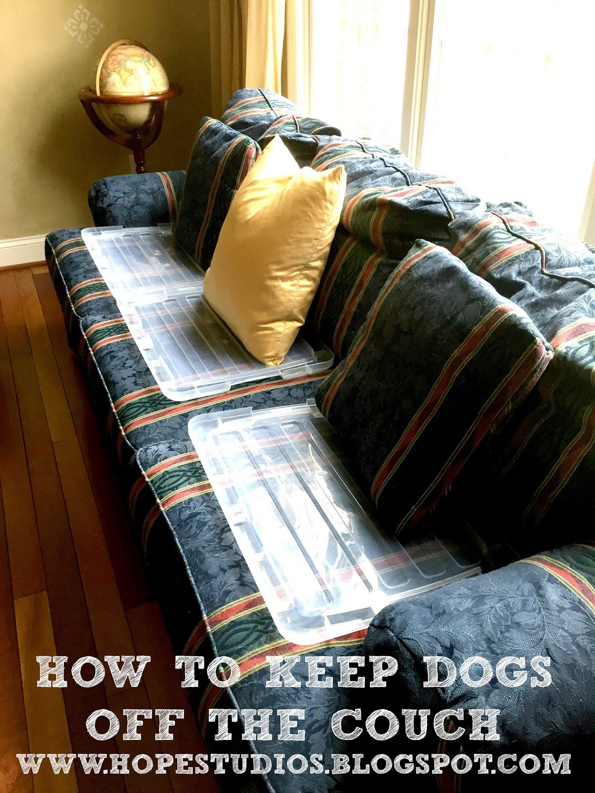 How I Keep My Dog Off The Couch Keep Dog Off Couch German Shorthaired Pointer Dogs