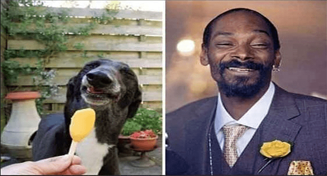 18 Famous Celebrities With Their Animal Doppelganger Snoop Dog Funny Animal Pictures Funny Photos